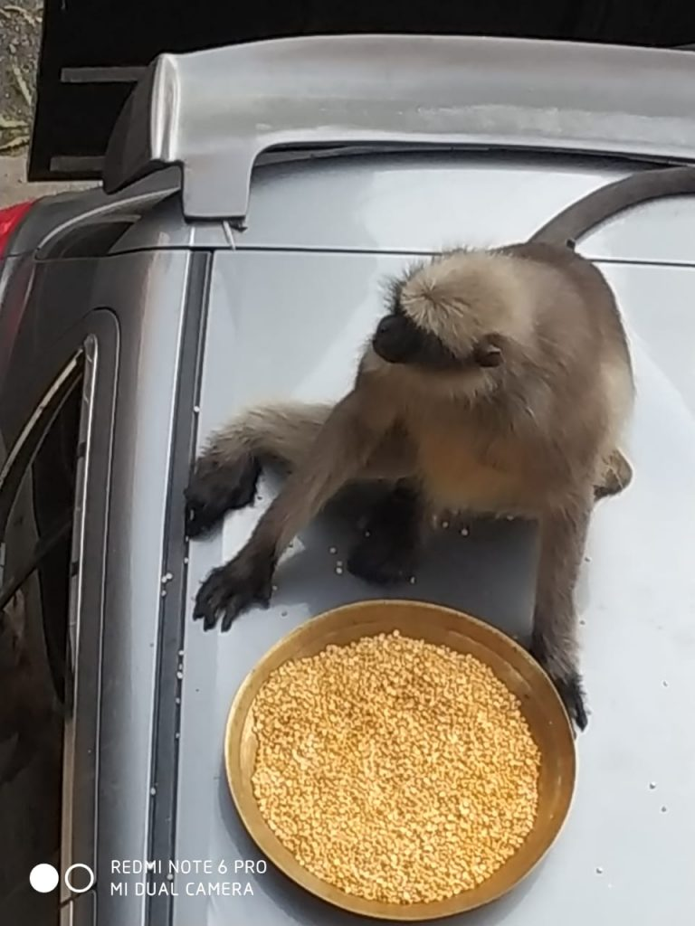 A monkey sits on top of car to savour daal outside a building in Pimpri Chinchwad area of Pune on Monday